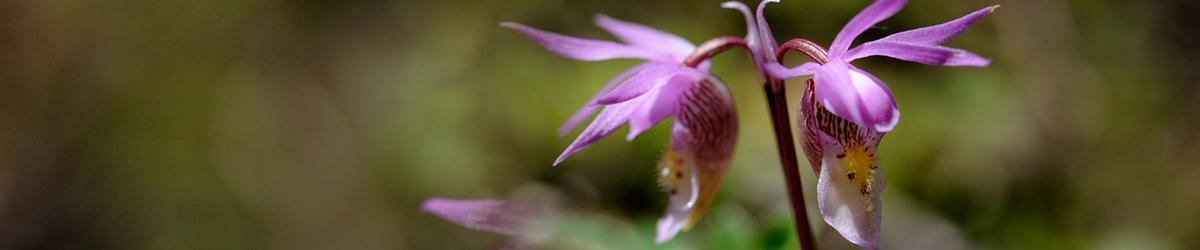 稀有兰花品种