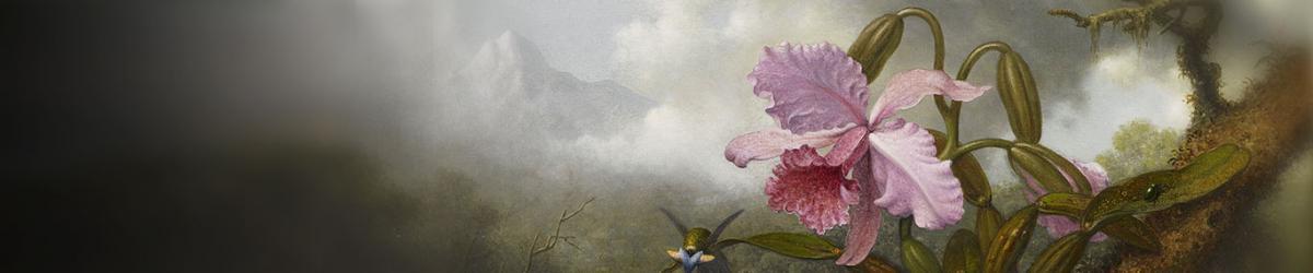 濒危兰花品种