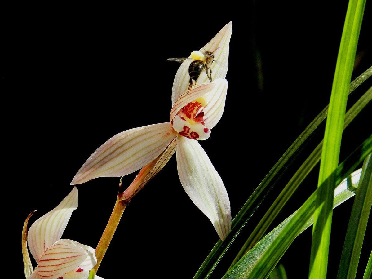 常见兰花的品种介绍和产业现状