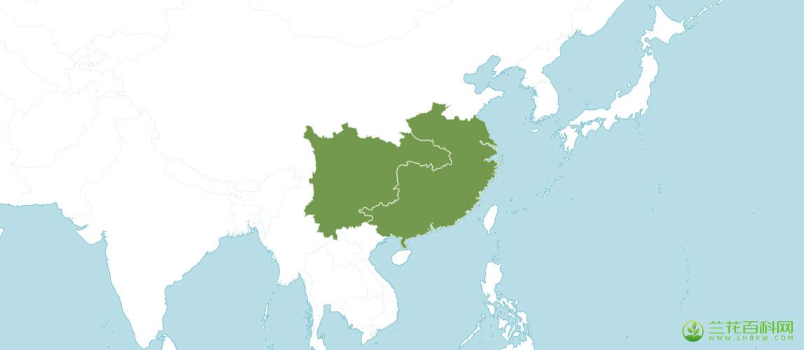 无距虾脊兰Calanthe tsoongiana Tang & F. T. Wang