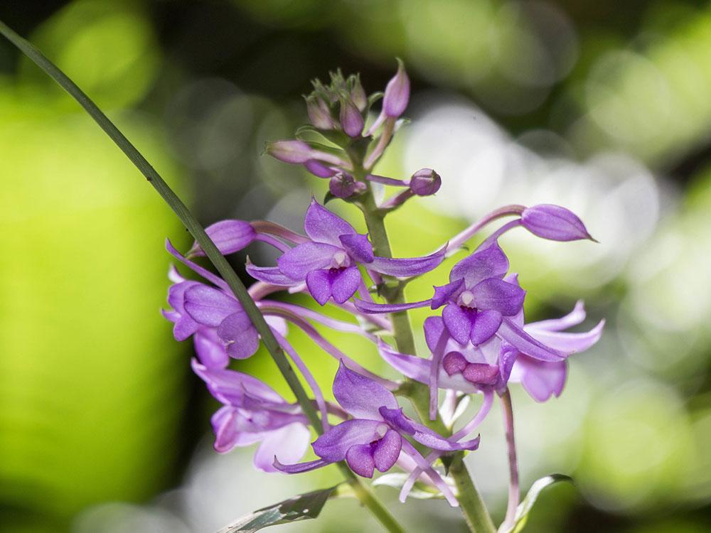 虾脊兰怎么种植和养护?